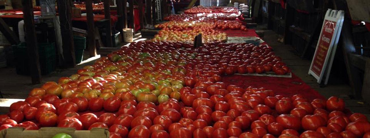 Tomato Barn